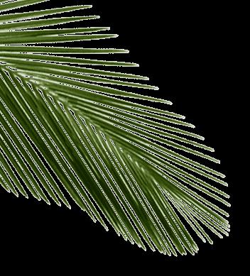 palm_tl